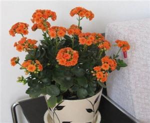 西安花卉配送